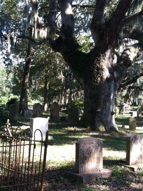 Live oaks weeping with Spanish moss + wrought iron fences leaning helter-skelter + crumbling 19th century tombstones = this writer's paradise