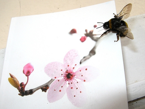 Bumblebee with Paper Flower