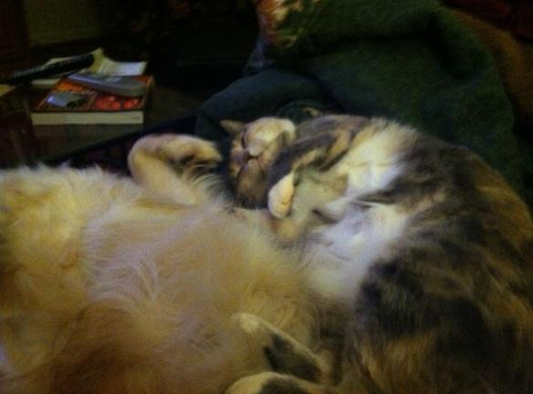 Fuzzies Cuddle
