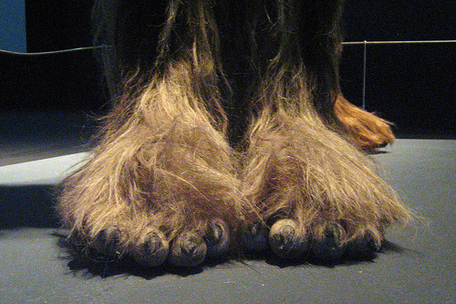 Wookiee Feet