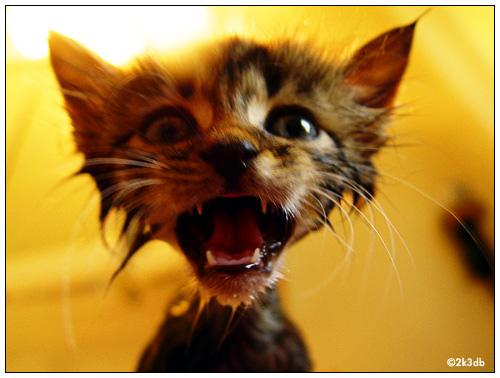 Freak Out Kitty