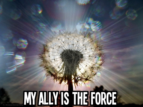2_My ally with text
