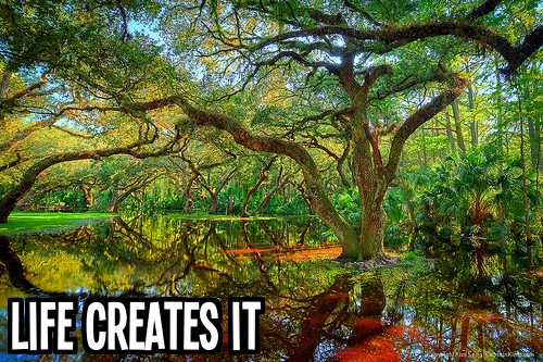 4_Life creates it with text