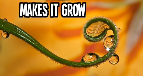 5_Makes it grow with text